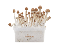 Kits de cultivo FreshMushrooms®