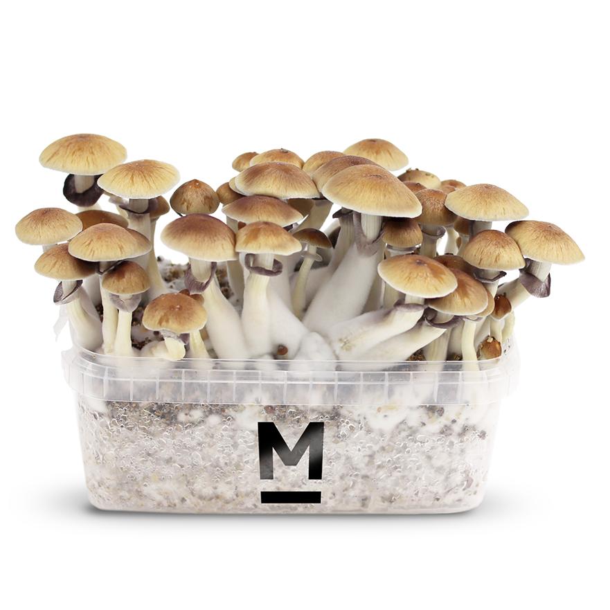 Kits de cultivo Mondo®