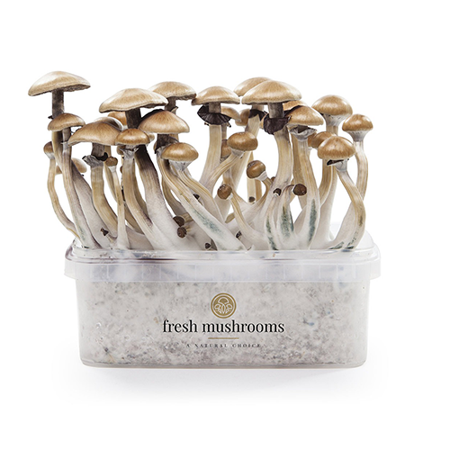 Kits de cultivo FreshMushrooms®