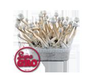 SupaGro Magic Mushrooms Grow Kits