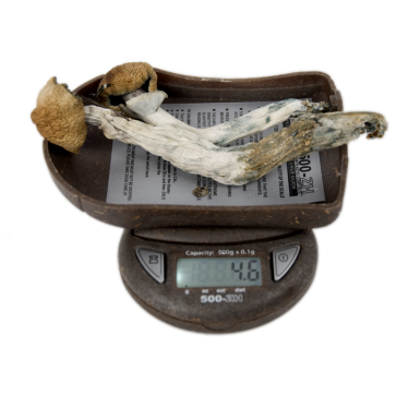 My Weigh 500-zh digital pocket scale mushrooms